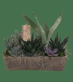 Large Stone Succulent