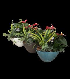 Medium Tropical Dish Garden
