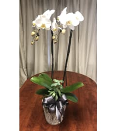 Large Orchid in Planter