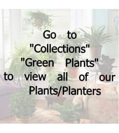 Green Plants/Planters