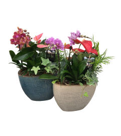 Orchid Planter w/Tropical Plants