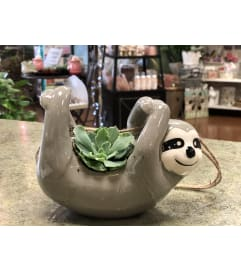 Succulent Sloth Planter