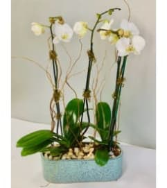 White Orchids in Blue Long Ceramic