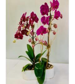 Purple Orchids in White Circular Ceramic