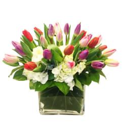 Classic Tulips