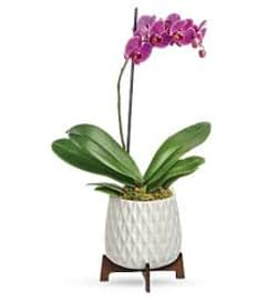 Orchid in Planter with Stand