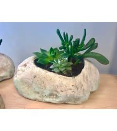 Rock Succulent Garden