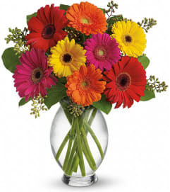 Knowles Gerbera Brights