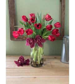 Cherry Tulip
