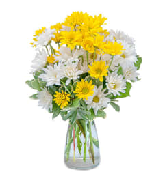 ASSORTED LONG LASTING DAISIES ARRANGED IN A VASE
