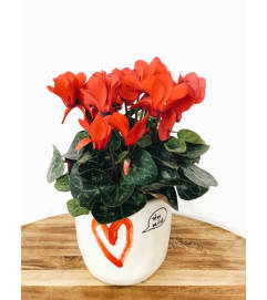 Circle of Love Cyclamen