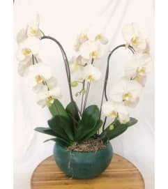Fall in Love with Orchids