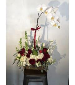Msf Lovely Orchid Arrangement