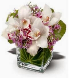 Tropical Cymbidium Orchid