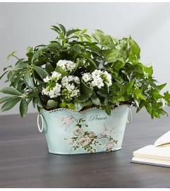 Peace & Healing™ Dish Garden