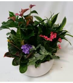 Mom's Flower Garden