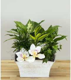Twig's Orchid Garden