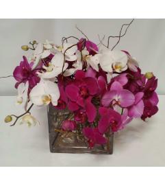 Romantic Orchids