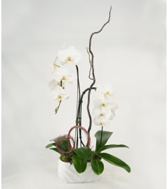Double White Orchid Elegant Planter