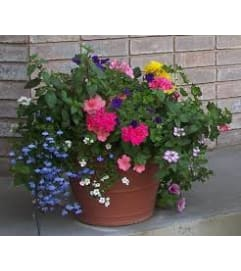 FLORIST CHOICE SEASONAL PATIO POT