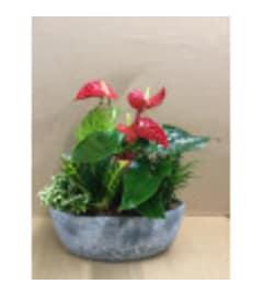 Christmas Stone Planter