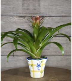 Decorative Bromeliad Planter