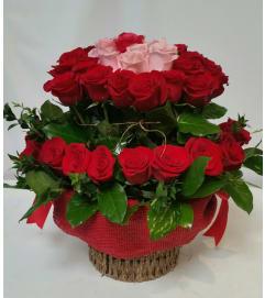 Red Rose Romance