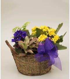 Blooming Plant Basket