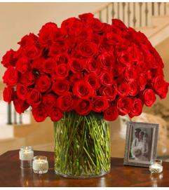 100 Premium Roses