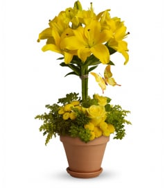 Yellow Fellow DW