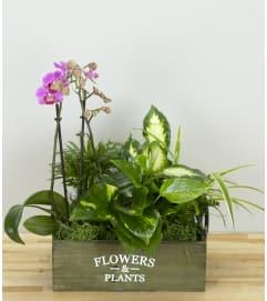 Orchid Paradise Garden Basket