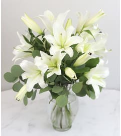 Classic White Lily