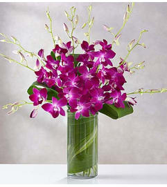 Orchid Embrace™ - Purple