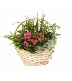 Sympathy Planter Basket