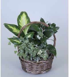 Foliage Planter
