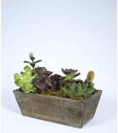 Succulent Window Box