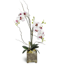 Opulent Double Orchid