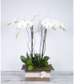 Decorative Premium Orchid Planter