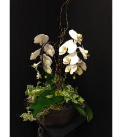 Exquisite Orchid Garden