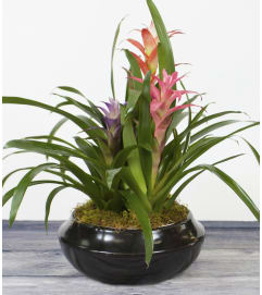Multi Colored Bromeliad