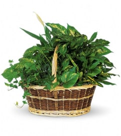 Large Basket Garden