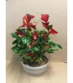 Christmas Anthurium Planter