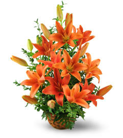 Asiatic Lily Basket