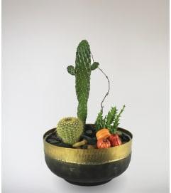 Stargazer's Cactus Garden