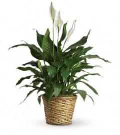 GRACEFUL GREEN PLANT