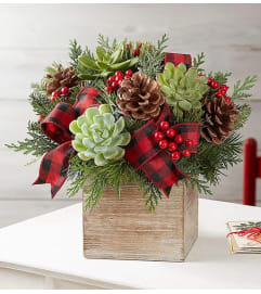 Modern Christmas Succulent Arrangement™