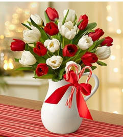 Peppermint Pitcher of Tulips™ - Red and White