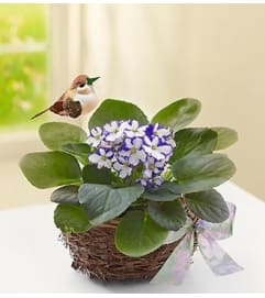 Violet Plant in Birds Nest