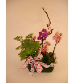 Mini Orchid in a Basket