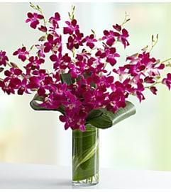 Embrace Orchid